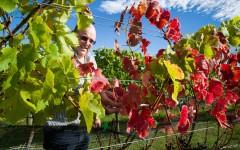 [行旅随拍]纯净新西兰随拍之葡萄庄园
