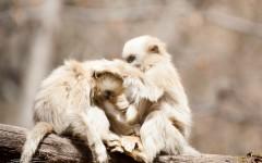 [新年快乐]猴年新春特辑,恭祝各位合家团圆幸福美满
