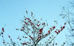 [行旅随拍]胶片摄影花卉随拍之一