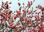 [行旅随拍]胶片摄影花卉随拍之三