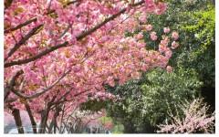 [行旅随拍]四月春意,繁花胜景之一