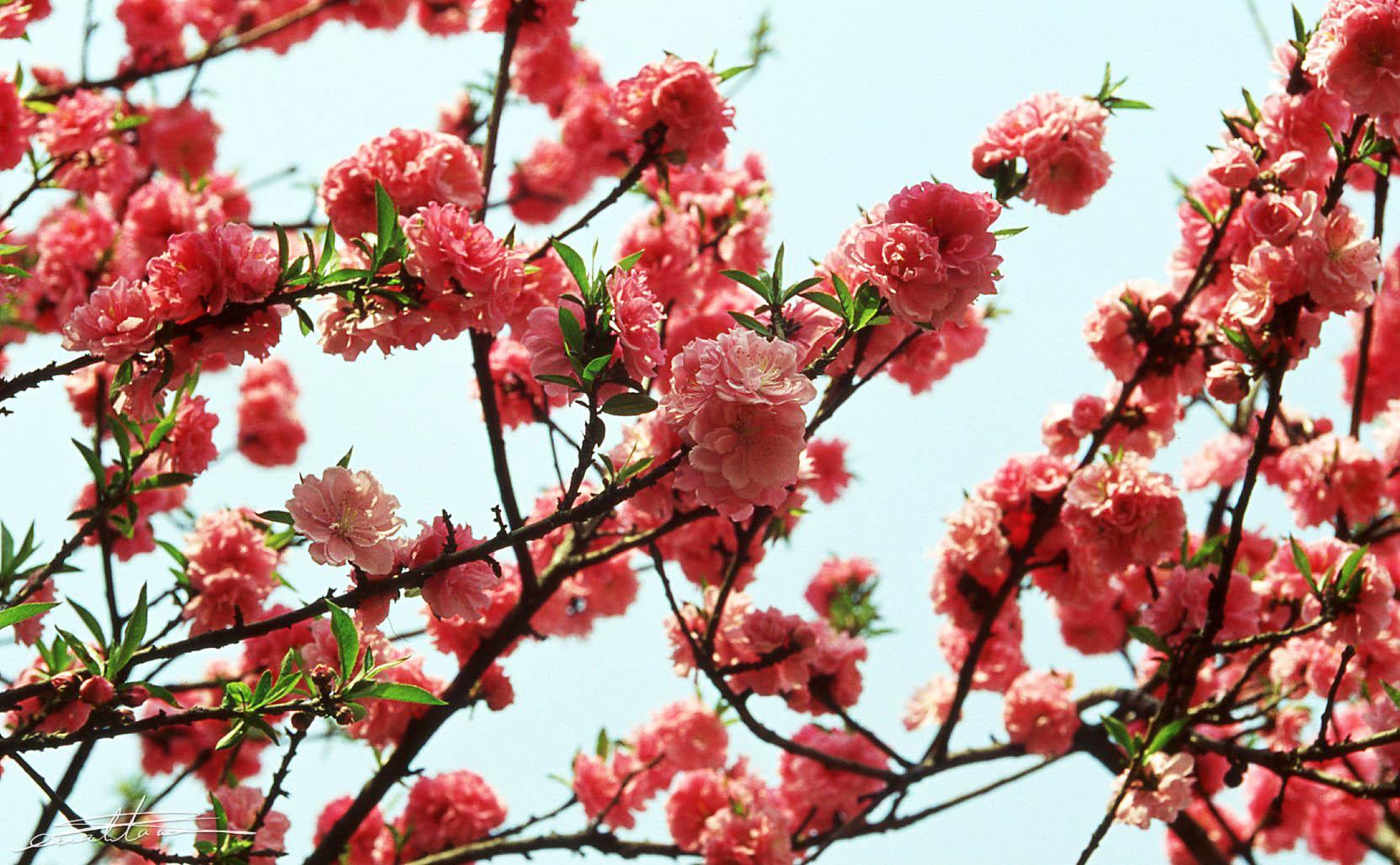 [行旅随拍]胶片摄影花卉随拍之三-行者李涛