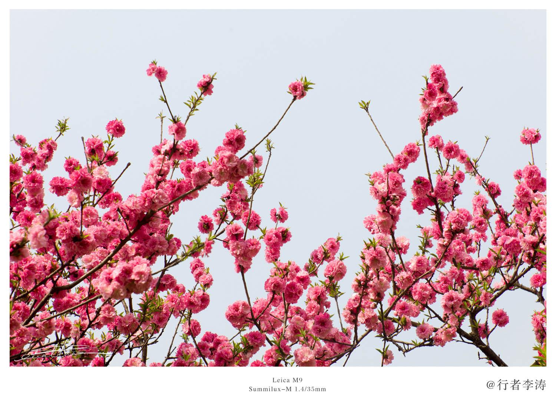 [行旅随拍]四月春意,繁花胜景之二-行者李涛